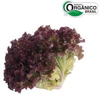 Alface roxa orgânica (unid.)